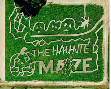 haunted maize