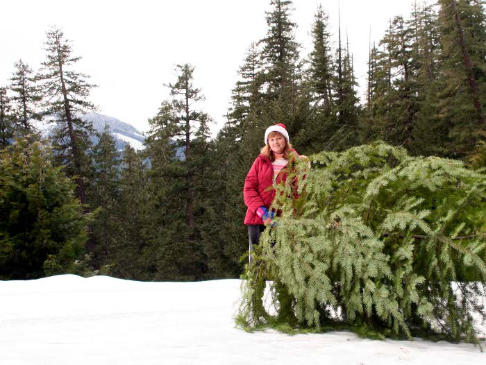 Christmas tree hunting on the Willamette National Forest
